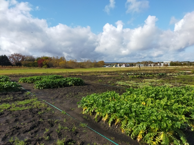 耕種農業全般